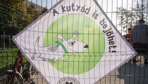 Kedvükre játszhatnak a kutyák Gazdagréten